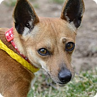 Adopt A Pet :: Alicia - Meridian, ID