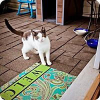 Adopt A Pet :: Annie - Virginia Beach, VA