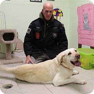Labrador Retriever Mix Dog for adoption in Elyria, Ohio - Gulliver