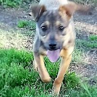 Adopt A Pet :: Gretta - Jefferson, TX