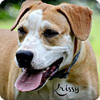 Adopt A Pet :: Krissy-loves water - Glastonbury, CT