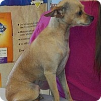 Adopt A Pet :: Holly ~ Courtesy listing - San Angelo, TX