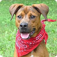Adopt A Pet :: Burch - Mocksville, NC