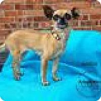 Adopt A Pet :: Maddie - Shawnee Mission, KS