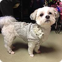Adopt A Pet :: Rosie - Adoption Pending - Gig Harbor, WA