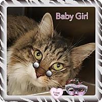 Adopt A Pet :: Baby Girl - Harrisburg, NC