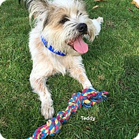 Adopt A Pet :: Teddy - Brightwaters,, NY