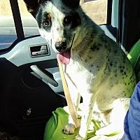 Adopt A Pet :: MARSHALL - Pena Blanca, NM