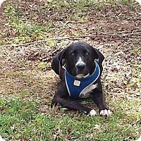 Adopt A Pet :: Jericho - Allentown, NJ