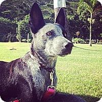 Adopt A Pet :: Pepper - Honolulu, HI