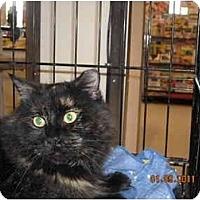 Adopt A Pet :: Mercedes - Riverside, RI