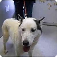 Adopt A Pet :: PJ ** URGENT - Albany, NY