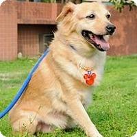 Adopt A Pet :: Meesha - Adoption Pending - Vancouver, BC