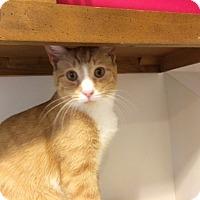 Adopt A Pet :: Kermit - Trevose, PA