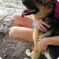 Adopt A Pet :: Sassy - Pompano Beach, FL