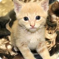 Adopt A Pet :: Blake Shelton of the