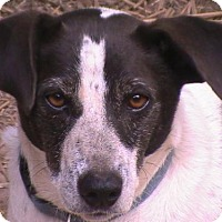 Terrier (Unknown Type, Medium) Mix Dog for adoption in Londonderry, New Hampshire - Pip