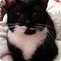 Adopt A Pet :: Peach - Alexandria, VA