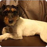 Adopt A Pet :: Gabby - Arlington, TX