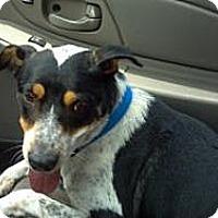 Adopt A Pet :: Momma Luv - Phoenix, AZ