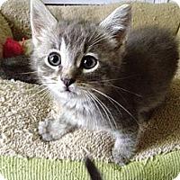 Adopt A Pet :: J-Paw - Monroe, GA