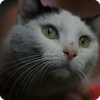 Adopt A Pet :: Samantha - Canoga Park, CA