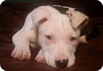 Shepherd (Unknown Type)/Terrier (Unknown Type, Medium) Mix Dog for adoption in Anniston, Alabama - Lil Bit