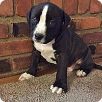Adopt A Pet :: WATSON - MILWAUKEE, WI