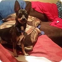 Adopt A Pet :: Tessa - Homewood, AL
