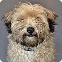 Adopt A Pet :: Duncan - Meridian, ID