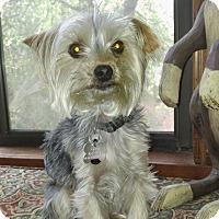 Adopt A Pet :: Teddy - Suwanee, GA