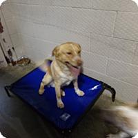 Adopt A Pet :: BUTTERCUP - Osceola, AR