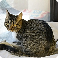 Adopt A Pet :: Carolina - Fountain Hills, AZ