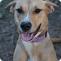Adopt A Pet :: Missy - McDonough, GA