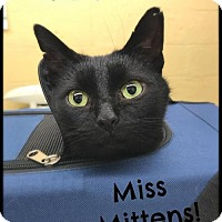 Adopt A Pet :: Miss Mittens! - Akron, OH