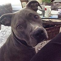 Adopt A Pet :: ZZ-Roxie *courtesy post - Rancho Santa Margarita, CA