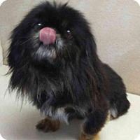 Adopt A Pet :: Guy - Thorndale, TX