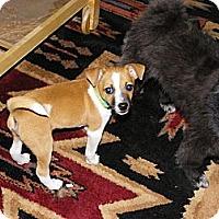 Adopt A Pet :: TYLER - Hesperus, CO