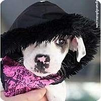 Adopt A Pet :: Joplin - Mission Viejo, CA