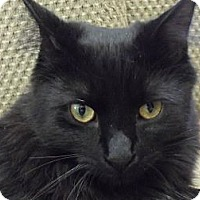 Adopt A Pet :: Matty - Xenia, OH