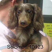 Adopt A Pet :: Solomon - Greencastle, NC