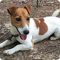Adopt A Pet :: Disney - Brattleboro, VT