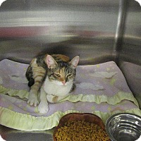 Adopt A Pet :: Cassidy - Grand Junction, CO