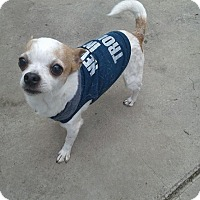 Adopt A Pet :: CHIQUITO - Brea, CA