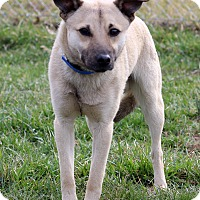 Adopt A Pet :: Sean - Waldorf, MD