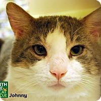 Adopt A Pet :: Johnny - Oakville, ON