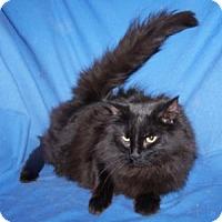 Adopt A Pet :: Sugar - Colorado Springs, CO
