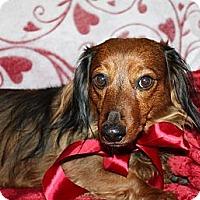Adopt A Pet :: Harmony - Louisville, CO