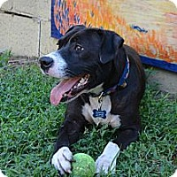 Adopt A Pet :: Clinton - Houston, TX