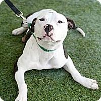 Adopt A Pet :: Ms. Moo - Mission Viejo, CA